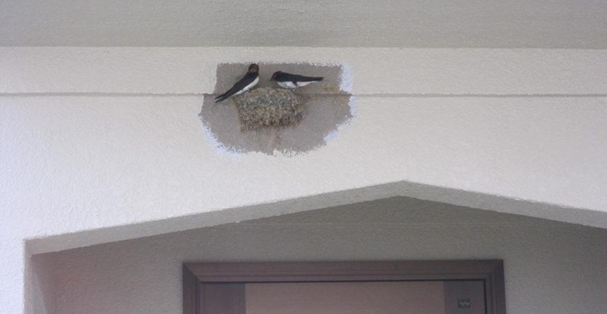 外壁・屋根の塗装工事|埼玉県比企郡嵐山町のN様邸